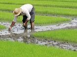 ترویج الگوی کشت محصولات کم آب بَر در استان