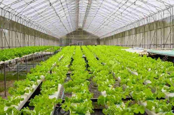 اشتغالزایی برای ۱۰۰ نفر در  مجتمع گلخانه ای سربیشه