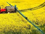 کلزاکاران مناطق معتدل و سردسیر مزارع خود را سمپاشی کنند