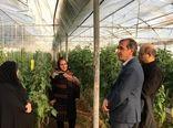 صادرات بیش از 20 تن محصول گواهی شده حمید آباد قزوین به روسیه