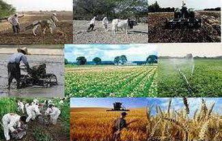 تأمین نشاء 800 هکتار از اراضی کشاورزی کشور با افتتاح 2 واحد گلخانه ای در نظرآباد