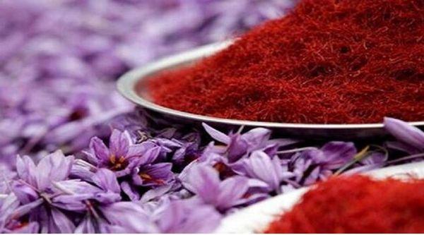 خرید حمایتی زعفران به مدت یک ماه ادامه خواهد داشت