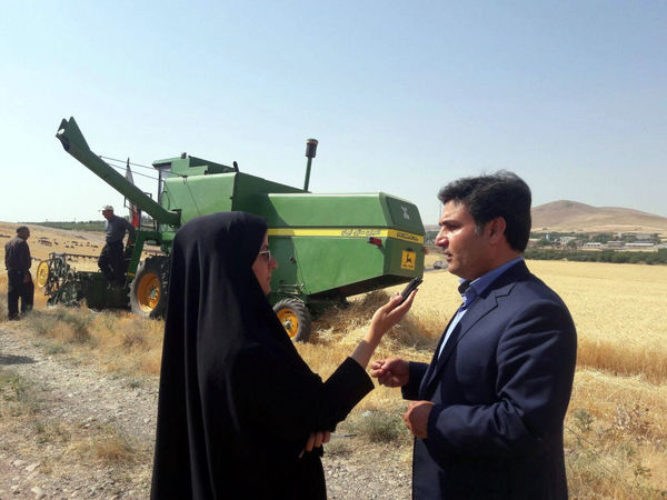 آغاز برداشت گندم در شهرستان مراغه
