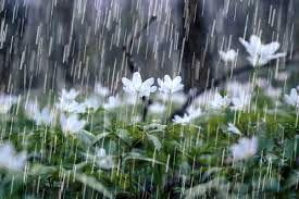 خسارت بارشهای بهاری به بخش کشاورزی شهرستان طبس