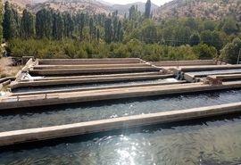 ایجاد زنجیره تولید ماهیان سردآبی در شهرستان سپیدان