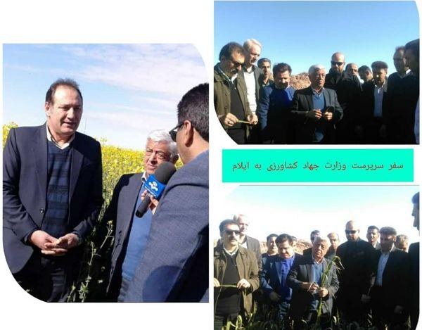 بازدید سرپرست وزارت جهاد کشاورزی از مزارع گندم و کلزا در دهلران