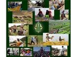 جذب 195 درصدی تسهیلات اشتغال روستایی در مازندران