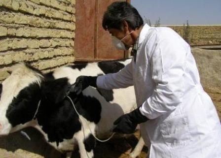 بازدید کارشناسان اداره کل دامپزشکی استان کرمان از مجتمع های گاوداری شهرستان شهربابک