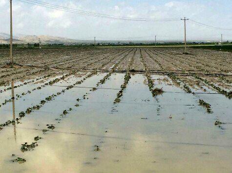 خسارت سیل به بخش کشاورزی مُهر