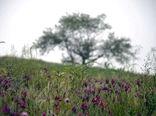 توسعه ۲ هزار هکتاری گیاهان دارویی در سال ۱۴۰۰ در دستور کار است