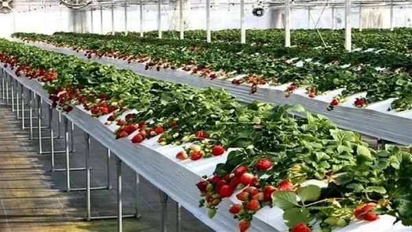 خبر خوب برای کشاورزان/ زمان صدور مجوز تأسیس گلخانه یک ماهه شد