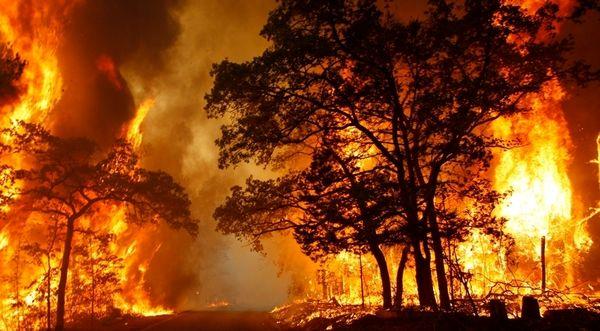 آتشسوزی جنگلها با کنترل منابع طبیعی ۸۰درصد کم شده است