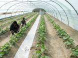 توسعه گلخانهها و سایبانها در طرح ۴۶ هزار هکتاری آبرسانی دشت سیستان