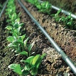 اجرای سامانههای نوین آبیاری در 750 هکتار از اراضی کشاورزی چالدران