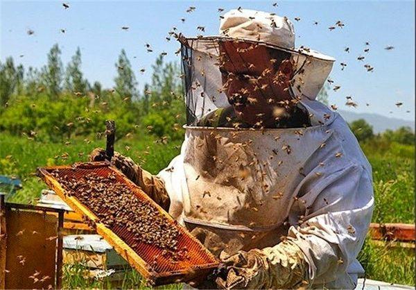 افزایش 35 درصدی تولید عسل در شهرستان فارسان