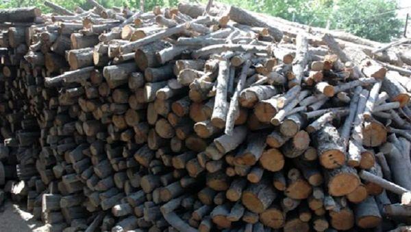 کشف یک انبار چوب جنگلی غیرمجاز در لردگان