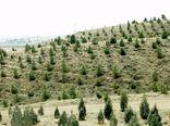 ۱۳۳ هکتار جنگلکاری در قزوین انجام شد