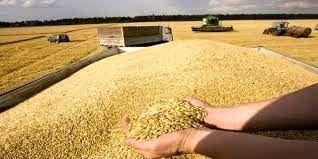 کاهش 80 درصدی تحویل گندم به سیلوهای خراسان شمالی