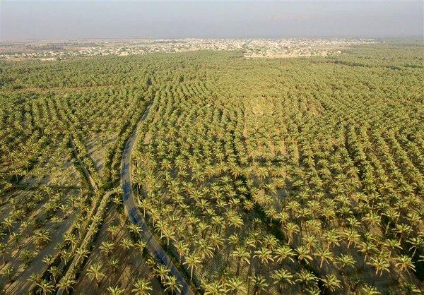 گردشگری کشاورزی معامله هر دو سر سود در بوشهر