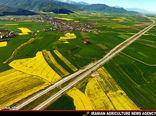 ۴۰۰ هکتار مزرعه الگویی کلزا  در استان قزوین ایجاد شد