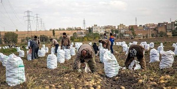 نفع سیبزمینیکاران در کاهش هزینه صادرات است