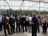 بازدید مدیران جهادکشاورزی آذربایجان شرقی از مجتمع گلخانهای ارس تارلا در جلفا