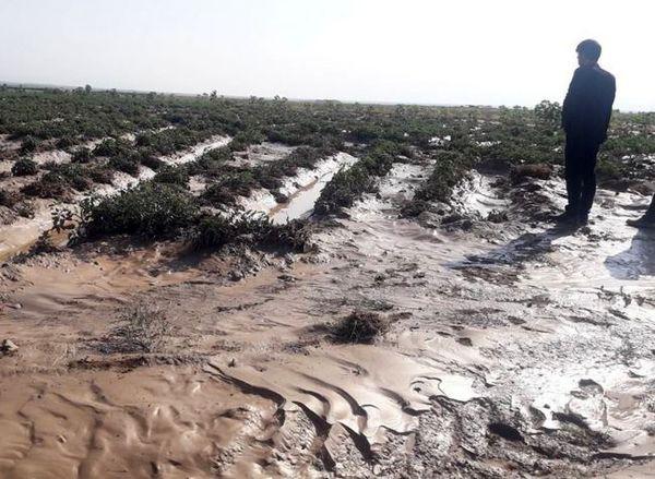 خسارت سیل به ۵۱۰ هکتار عرصه کشاورزی خراسان شمالی