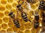 ضرر خشکسالی گریبانگیر زنبورستان هایی که به درستی مدیریت نشده اند