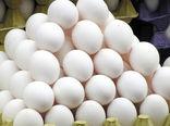 استان البرز سومین تولیدکننده تخممرغ در کشور