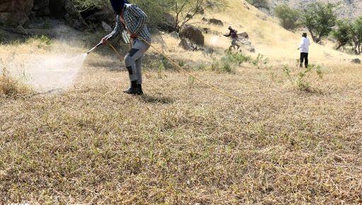 مبارزه با ملخ در سطح ۸۵۰ هکتار از اراضی شیروان انجام شد