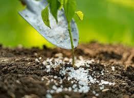هشدار کاهش سطح و کیفیت محصولات با حذف ارز ترجیحی از نهادههای کشاورزی