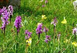 پیش بینی 5484 هکتاری گیاهان دارویی در خراسان شمالی