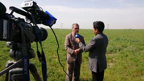 60 هکتار از مزارع کشاورزی شهرستان آبیک به کشت زیره سبز دیم اختصاص دارد