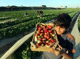 تاجران محصولات کشاورزی نگران از انتخابات پارلمانی عراق