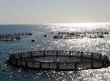 نقش تحریمها در عدم تحقق برنامههای پرورش ماهیان در قفس