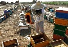 ارزآوری 110 میلیارد تومانی عسل در اردبیل