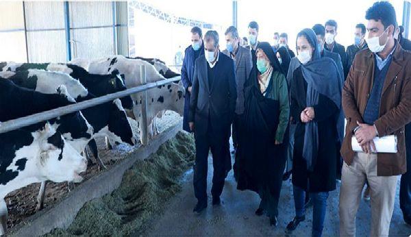 بازدید معاون رییس جمهور از یک واحد دامداری در شهرستان بویین زهرا