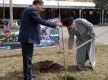 تاکید امام جمعه ارومیه بر ترویج فرهنگ درختکاری در جامعه