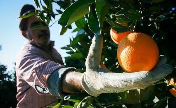 کاهش قیمت با ورود میوههای پاییزه