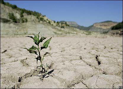 سطح کشت محصولات بهاره چهارمحال و بختیاری 4 هزار هکتار کاهش یافت