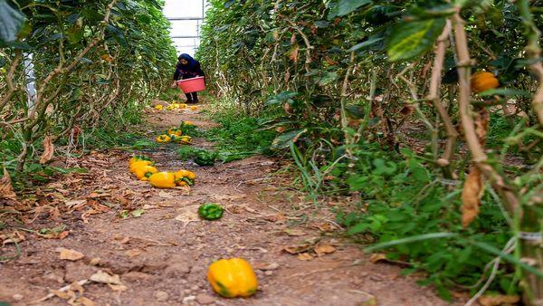 انگیزه برای توسعه کمی و کیفی صنعت کشاورزی اصفهان وجود دارد