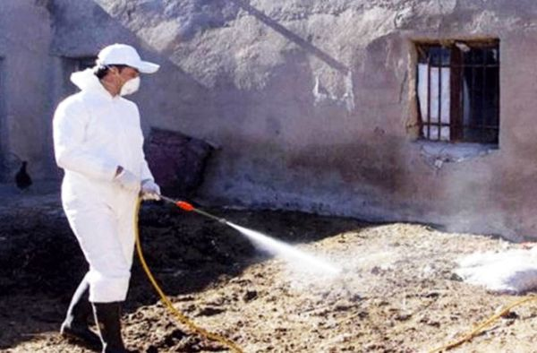 ایمن سازی ۲۰۰ هزار راس دام علیه بیماریهای مشترک بین انسان و دام در سیستان و بلوچستان