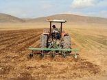 393 هزار هکتار از اراضی کرمانشاه زیر کشت گندم رفت