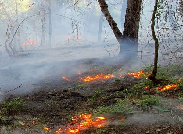 در نیمه نخست امسال، عرصههای طبیعی خراسان شمالی ۸۵ بار آتش گرفت