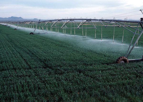 اجرای 12 هزار هکتار سیستم آبیاری نوین در اراضی دریاچه ارومیه