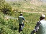 مبارزه با ملخها در مناطق کوهستانی بوشهر با سختی زیاد ادامه دارد