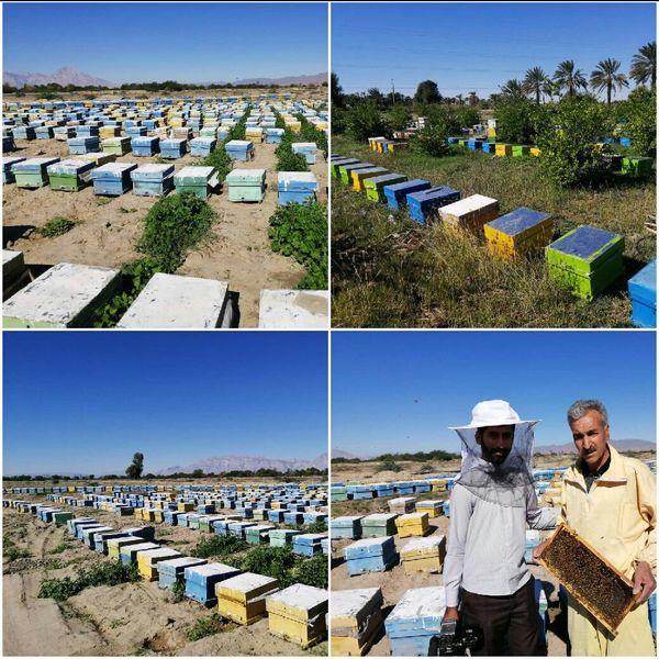 کوچ 25 زنبور دار با 13 هزار کلنی به میناب