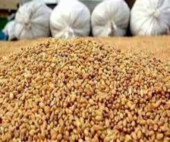 ۲۰ تن خوراک طیور احتکار شده در شهرکرد کشف شد