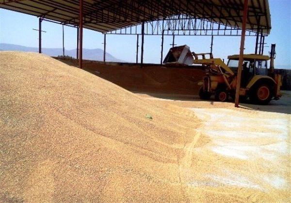 بیش از ۷۲ هزار تن گندم مازاد بر نیاز کشاورزان کردستان خریداری شد