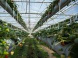 در سه سال اخیربیش از ۲۰ هزار متر مربع گلخانه در شهرستان سمیرم احداث شد
